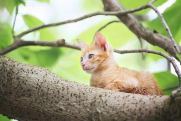 A cute brown kitty.