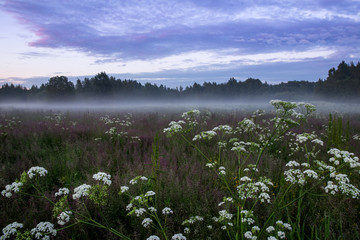 Blooming grass field is covered with fog in Helsinki Finland