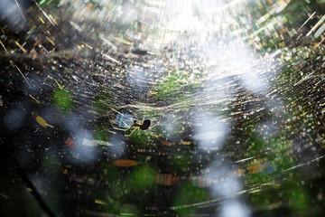 Spider nest large web sunbeams in forest near Helsinki Finland