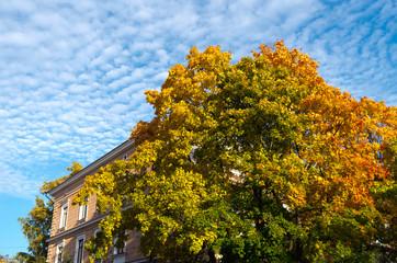Shiny autumn