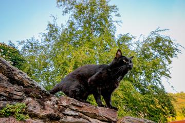 Le chat noir sur le vieux mur dans les rues de belcastel