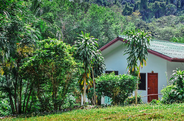 house in the rainforest jungle