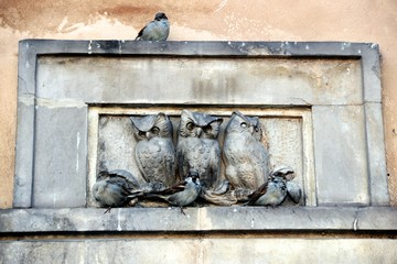 Picture with three Owls and Sparrows - Warsaw - Poland