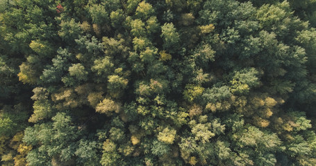 Aerial top view of autumn trees in wild park in september