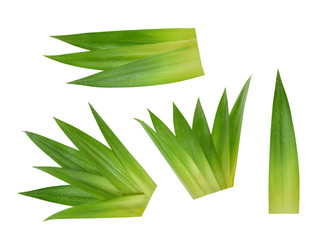 Pineapple leaves isolated without shadow
