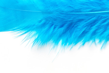 Close-up of Blue feather  isolated on white
