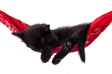 Little black kitten sleeps on a red hammock. Small cat sleeps sweetly as a small bed. Sleeping cat on a white background. Cats rest after eating.