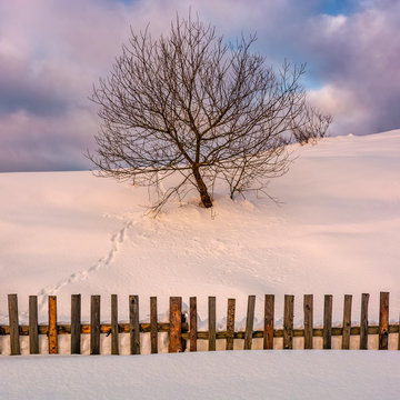 lonely  tree on snowy hillside behind the fence. beautiful countryside scenery in winter morning light