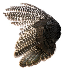 a bird wing from turkey with brown feathers closeup