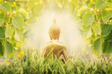 Close up Back of Golden buddha image cover by Bodhi tree  leaft with sunlight