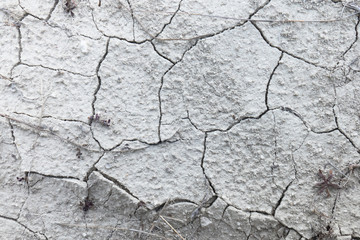 Dry cracked earth / Dried plant on dry cracked earth