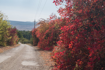 Walkway with colorful shrubs / Shrubs with red leaves along the country road