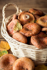 Lactarius deliciosus, commonly known as the saffron milk cap and red pine mushroom in wicker basket on rustic wooden background with autumn leaves.