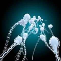 Sperm sex cells, illustration