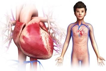 Child's heart, illustration