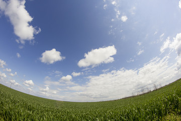Rural landscape with white and grey clouds and wheat field. Fisheye lens effect