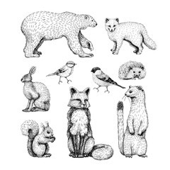 Animals sketch line drawings set on white background with hare, hedgehog, arctic fox, squirrel, ermine, bear, fox and birds