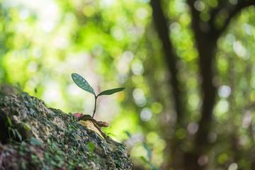 森の中で芽吹く木の芽 エコイメージ