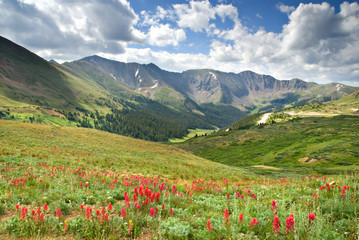 Alpine meadow full of Scarlet Paintbrush at Loveland Pass in Colorado. Wall mural