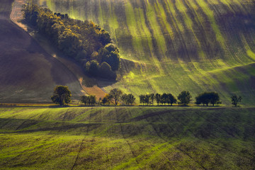 Moravian fields, Moravia, Czech Republic, around the village Kyjov  壁紙(ウォールミューラル)