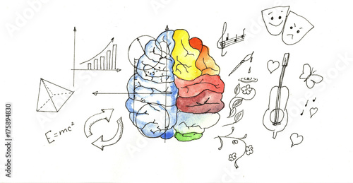 Drawing diagram of the difference between the left and right drawing diagram of the difference between the left and right hemispheres of the brain ccuart Choice Image