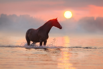 Horse standing in river at sunrise