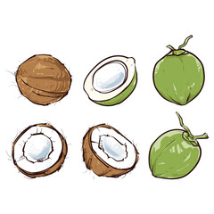 Coconut isolated on white background, Hand drawn vector illustration, Coconut set