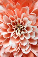 Fototapete - ink flower  background