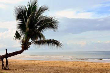 Coconut  and  sea