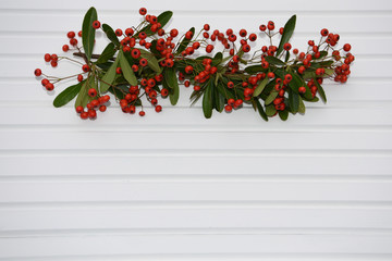 bright photography picture of Firethorn plant with red berries and laid on white wood background taken on the South coast of England UK
