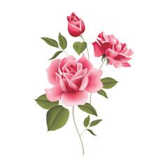 Rossa flower