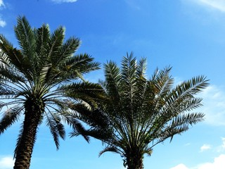 Palm trees against blue sky and clouds