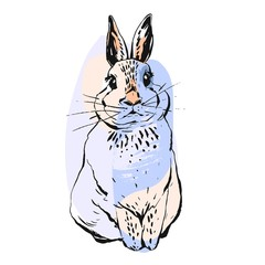 Hand drawn vector abstract realistic drawing bunny illustration in pastel colors isolated on white background.Easter design element for greetings,cards,signs,logo,decorations.Easter rabbit concept.