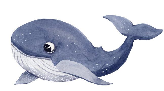 Watercolor christmas whale cartoon illustration