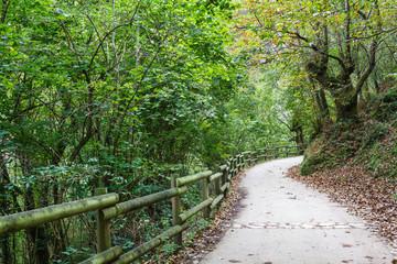 Ruta del Alba. Parque Natural de Redes, Asturias, España.