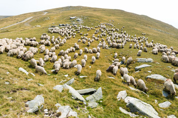 Sheep graze in the mountains