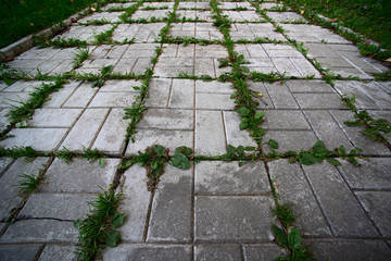 Green grass grows through urban cobbles