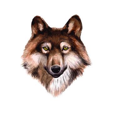 watercolor wolf illustration