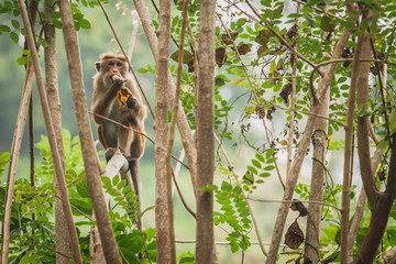 monkey siting in the tree and eating banana