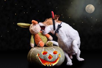 Devils mischief night concept with dog biting rabbit as vampire