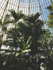 A glass dome ceiling and palm trees