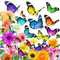 Colorful beautiful wild flowers and butterflies flying. Plants and Insects. Wildlife diversity. Isolated on white