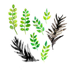Watercolor green leaf hand made isolated  illustrations set