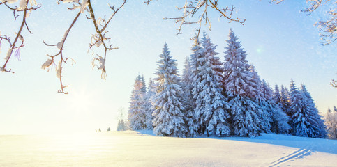 Wall Mural - Beautiful snowy landscape panorama with forest on background