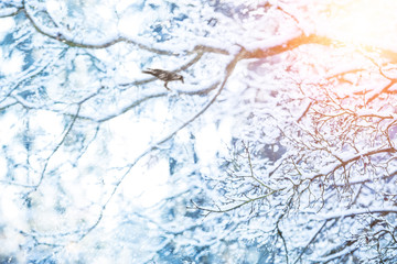 Detail of frozen tree branches with raven bird
