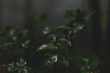 moody leaves