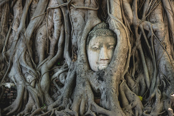 Roots fasten Buddha face