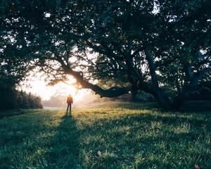 Boy standing in mist under tree