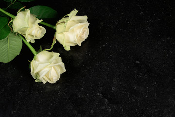 Overhead view of three white roses isolated on dark stone texture background.