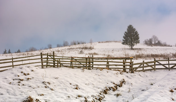 coniferous tree behind the wooden fence on snow covered meadow on foggy morning
